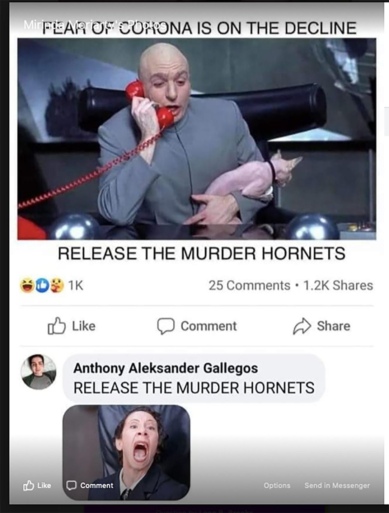 Murder-Hornets