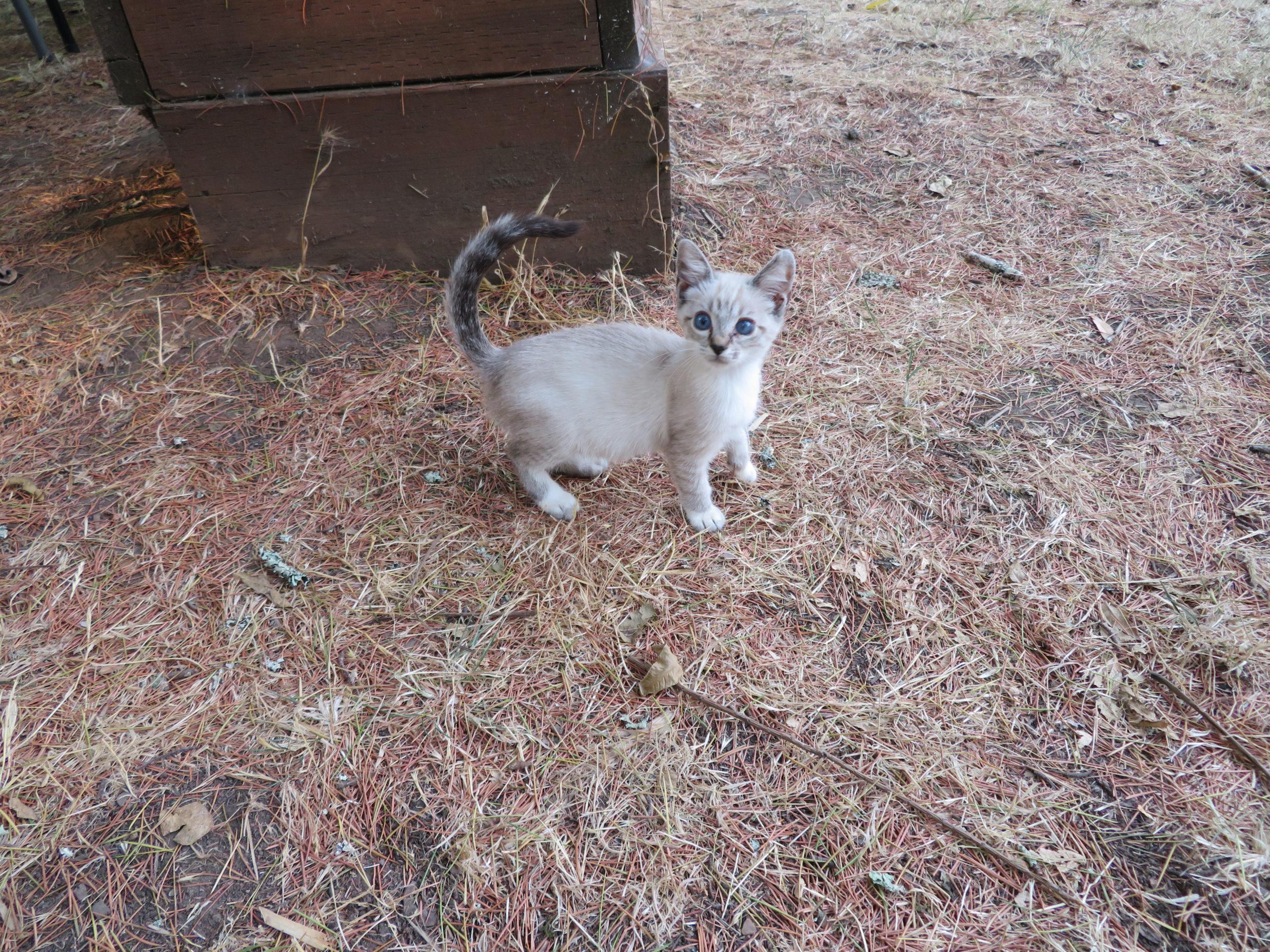 kitten-scaled