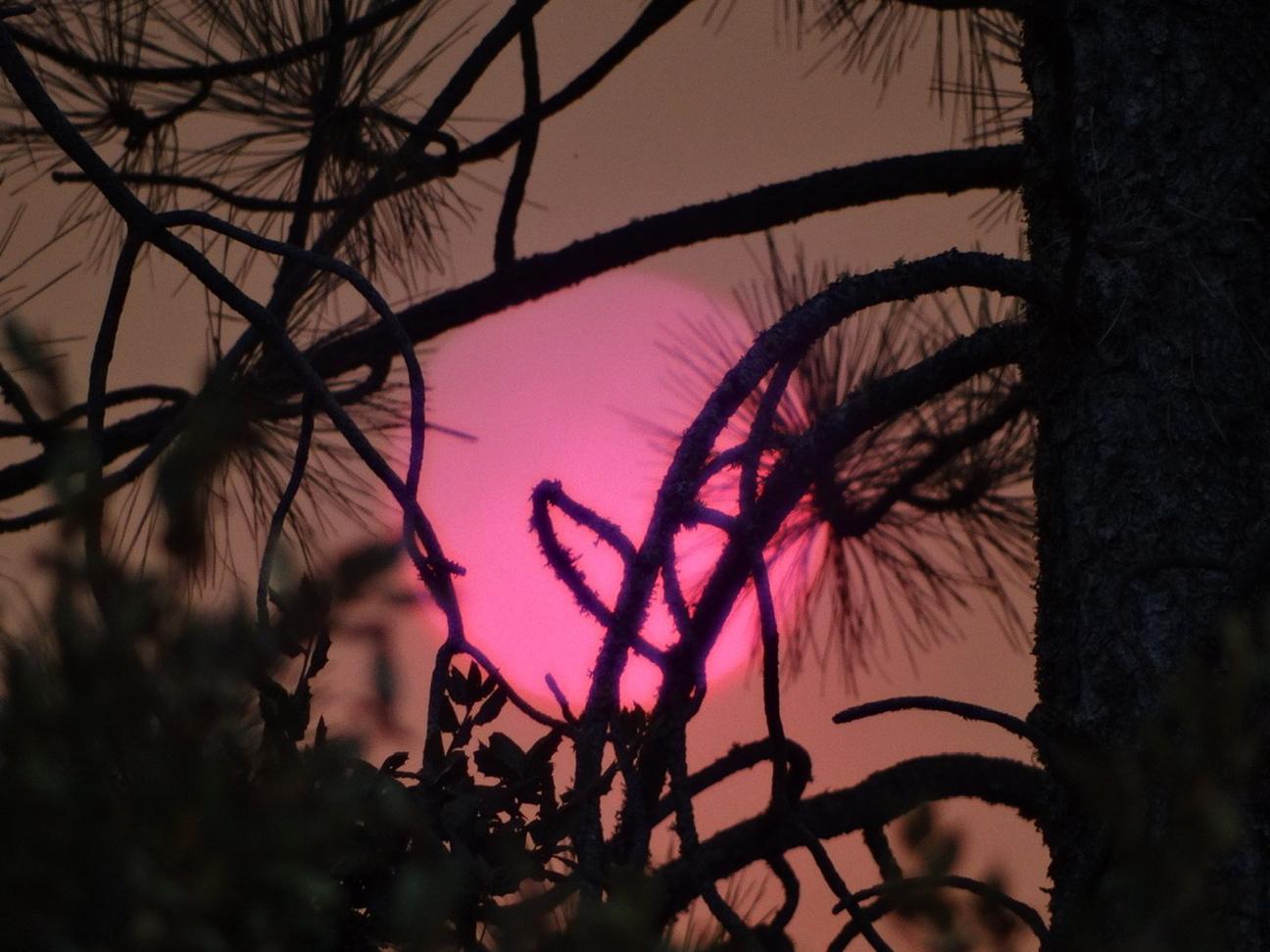 pine-sun