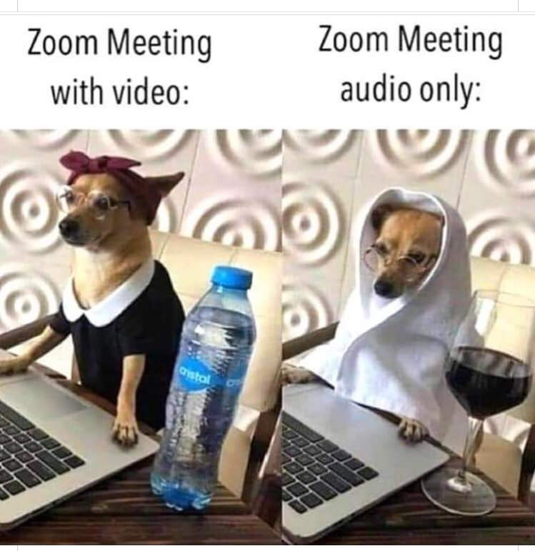 zoome-dogs