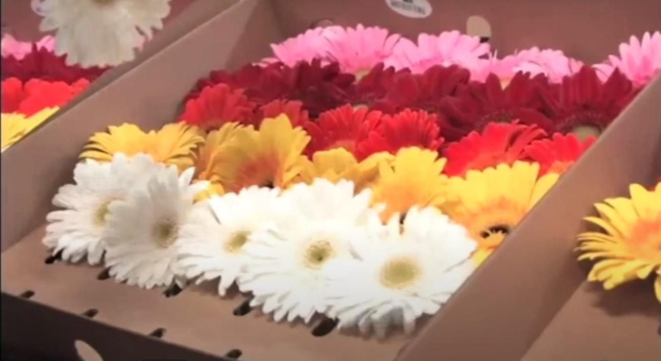 Gambatte-boxed-flowers